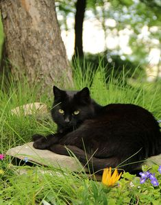 Black cat in the yard, resting on a rock which is probably warm from the sun.