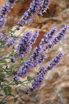 Purple Garden      Keywords:   Blue,   Garden,   Purple,   Lavender,   Spanish,   Flowers