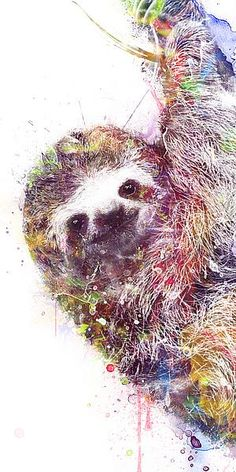 image conscious - V596D Sloth by VeeBee