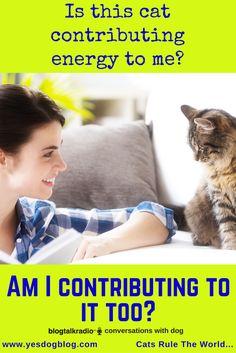 Have you ever wondered? Conversation, Dog, Cats, Animals, Diy Dog, Gatos, Animales, Animaux, Doggies
