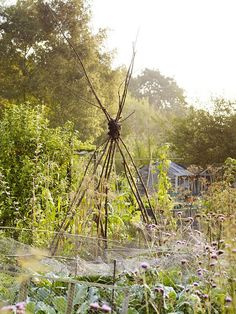 Cleve West allotment by Andrew Montgomery. Gardenista -unofficial British gardening
