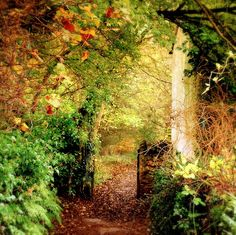 This is in the Forest of Dean, in the county of Gloucestershire; a truly magical place where J.K.Rowling lived (at Tutshill) from 1974-1983.