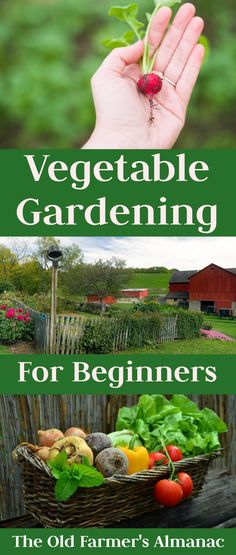 All the tips and advice for beginner vegetable gardeners! Find it now on Almanac.com.