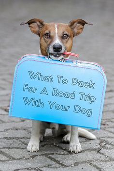 Got a big weekend planned? Taking the dog? Here's what to pack for your four-legged buddy to make sure he's safe and happy.
