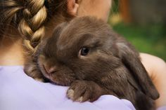 Proper nutrition is essential for good health. Learn the basics you need to know about feeding your rabbit.