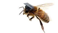 Brainy bees - creation.com