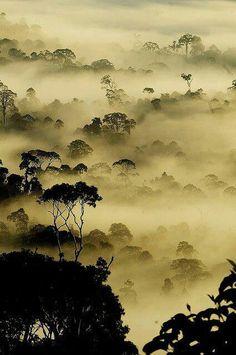 Rain forest in Bornue