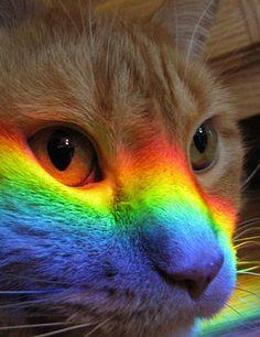 Kitty =)