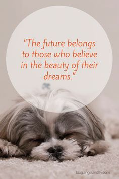 """Inspirational Quote - """"The future belongs to those who believe in the beauty of their dreams.""""  Visit us at blog.angelandlily.com!"""