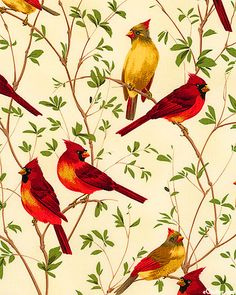 Cardinal Branches - Ivory