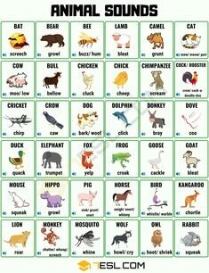 When speaking in or listening to the English language you are sure to come across some animal sounds. Whilst animals make the same sound all over the world, dif Animals Name In English, English Stories For Kids, Learning English For Kids, English Lessons For Kids, English Language Learning, Learn English Words, English Study, Teaching English, French Lessons