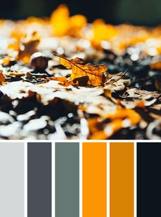 Black Grey and Mustard color scheme #color #colorpalette #fall