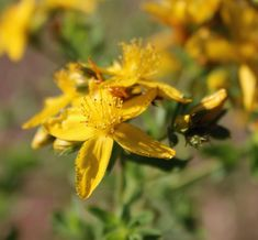 Natural Life, Grief, Herbalism, Herbs, Lost, Plants, Times, School, Instagram