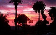 Santa Monica Beach Sunset Palm Tree Wallpaper