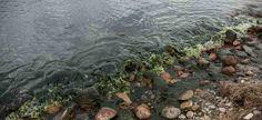 Новый принцип мониторинга состояния озера Байкал намерены использовать российские ученые, наблюдающие за уникальным водоемом. Корреспонденту издания «Экология Регионов» стало известно, что часть...