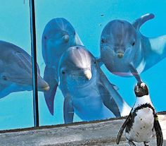 """dolphins: """"wow nice tux on this new guy nx door."""" penguin: """"who r these ppl dun look at me look that i know im handsum."""" wahaha @ six flags discovery aquarium :-)"""