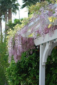 Elegant wisteria hanging from the arbor looks so lovely... This style of arbor would look very stylish as a front porch for a Victorian or Cottage-style home. Notice the arching trim on the corners of the posts. How lovely!