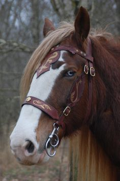 fairytales-and-campfires My beautiful shire mare Étaín with the new bridle I made for her. Horse Bridle, Western Horse Tack, Horse Gear, Horse Harness, All The Pretty Horses, Beautiful Horses, Animals Beautiful, Beautiful Creatures, Cute Horses