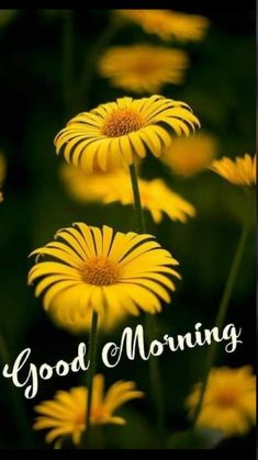 Sweet Good Morning Images, Good Morning Beautiful Pictures, Good Morning Love, Good Morning Friends, Good Morning Greetings, Good Morning Wishes, Cute Images For Dp, Image Hd, Morning Quotes