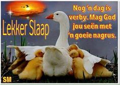Goeie Nag, Disney Cartoons, Good Night, Movies, Movie Posters, Afrikaans, Quotes, Disney Cartoon Drawings, Nighty Night