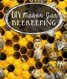 Beekeeping for Beginners, DIY beekeeping mason jar projects for your homestead. | http://pioneersettler.com/beekeeping-in-mason-jars/