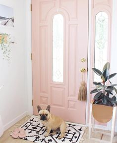 Pink door and a frenchie