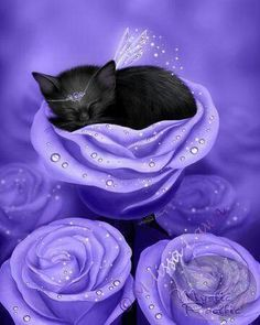 Items similar to SALE Black Cat Art Print // Sleeping Kitten // Lilac Daydreams - on Etsy Purple Love, All Things Purple, Purple Rain, Purple Stuff, Periwinkle, Purple Bed, I Love Cats, Crazy Cats, Cute Cats