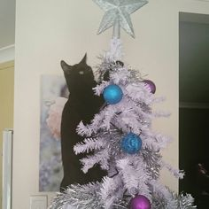 #catinatree #catinachristmastree #christmas #christmascat #catsofinstagram #blackcat #crazycat #Christmastree #whitechristmastree