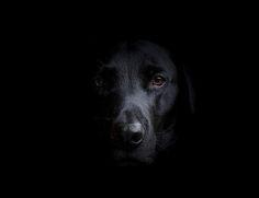 black number 1 | Flickr - Photo Sharing!  danny williams1