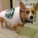 Coolest Pet Dog Homemade Costumes