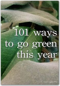 Ready to be more eco-friendly? Here are 101 easy ways to go greener this year.