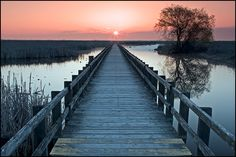Point Pelee National Park boardwalk, Ontario