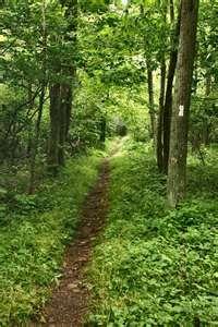 so peaceful on the Appalachian Trail