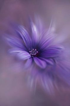 Photo by Allison Purple Love, All Things Purple, Shades Of Purple, Deep Purple, Purple Stuff, Purple Daisy, Periwinkle, Purple Flowers, Beautiful Flowers