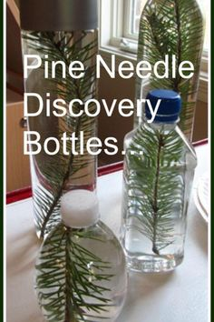Pine needle sensory bottles (it would be great to have a shelf full of discovery bottles/cans...etc)