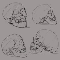 Fantastic Photographs skull drawing sketches Suggestions What's the serious difference between attracting in addition to sketching? To help response to this kind of conundrum Skull Reference, Art Reference Poses, Drawing Reference, Reference Images, Anatomy Reference, Design Reference, Skull Sketch, Skeleton Art, Skeleton Head Drawing