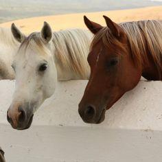 horses there sooooo beautiful!!!!!