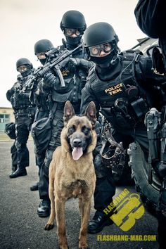 In honor of all the service dogs around the world Military Working Dogs, Military Dogs, I Like Dogs, Dog Love, German Sheperd Dogs, German Shepherds, Airsoft, Military Special Forces, Bravest Warriors