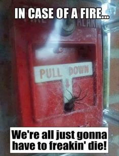 Only time I will ever post a pic of a spider! So funny!!! (And true)
