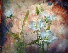 """Campanula on the Wild Side"" By Teresa Pople Photography"