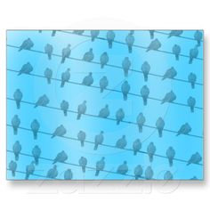 Birds on Wires Postcard