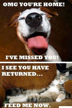 dogs > cats