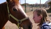 IKEA, Taco Bell, and Burger King: Keep horses out of our food!  Go to Change.org to sign this petition.