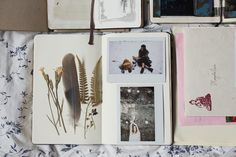 a foragers scrap book field notes and specimens