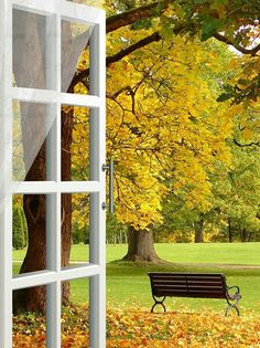 A window to the autumn