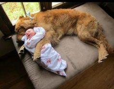 Golden babysitter.  Awwww