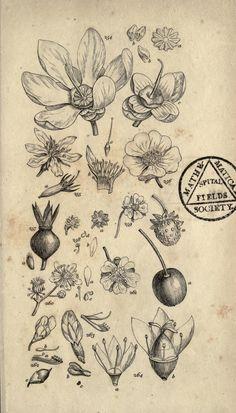 https://flic.kr/p/dSyLdq   n308_w1150   A grammar of botany,. London,Longman,1821.. biodiversitylibrary.org/page/23256084