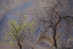 See more Photo Look, Trees, Painting, Beautiful, Art, Turkey Country, Art Background, Tree Structure, Painting Art