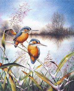 El Catálogo de Aves                                                                                                                                                      Más Pretty Birds, Beautiful Birds, Image 3d, Bird Artwork, Watercolor Bird, Watercolor Landscape, Bird Illustration, Bird Drawings, Bird Pictures