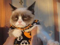 Un gato vestido para pasear en Halloween